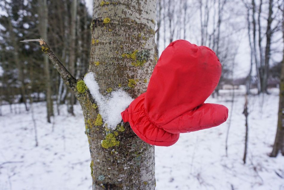 Red Snow Winter Cold Temperature Mitten Nature Beauty In Nature Focus On Foreground Tree Tree Trunk Weather Growth Lost Outdoors Close-up Day Bare Tree Clothes Red Mittens Wintertime Lost And Found Found Found Object No People Cold