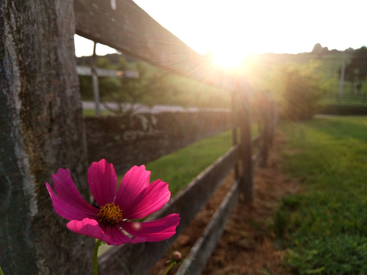 Country Cham TakeoverContrast Backlit Beauty In Nature Blossom Bright Close-up Day Fence Flower Flower Head Focus Focus On Foreground Fragility Freshness Growth In Bloom Lens Flare Nature Outdoors Petal Pink Springtime Sun Sunbeam Sunlight