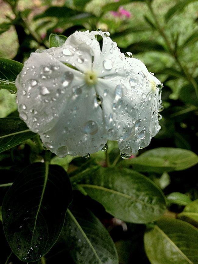 Gotas de Agua! 👌🍃📱📷 Agua Flor Blanca Naturaleza