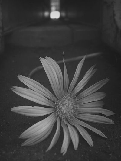 TheLoneFlower Flower Photography Creative Photography Picturetokeep_flowers Blackandwhite Photography Flowers_collection