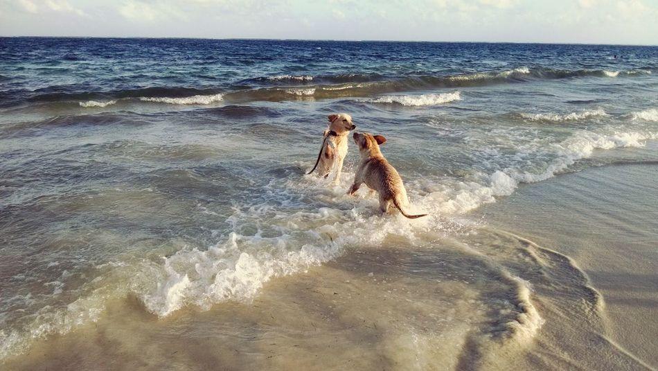 Cancun Relaxing JustFun Dogtime Enjoying The Sun