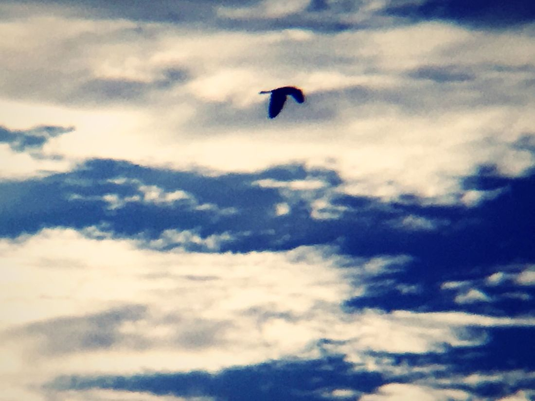 Motion Flying Sky Cloud - Sky Low Angle View Bird Animal Themes Mid-air One Animal Nature Day No People Animals In The Wild Outdoors Spread Wings Beauty In Nature Paragliding Parachute Animals In The Wild Nature Flock Of Birds ❤ Low Angle View Wow_pics #picoftheday #photooftheday #fotodeldia #ig_masterpiece #clubsocial #statigram #catalunyafotos #ig #igers #freaksbcn #barcelona #catalunya #bcn #irbarcelona #mytravelgram #pics_united #gang_family #igersbarcelona #igerscatalonia #gf_daily #desco