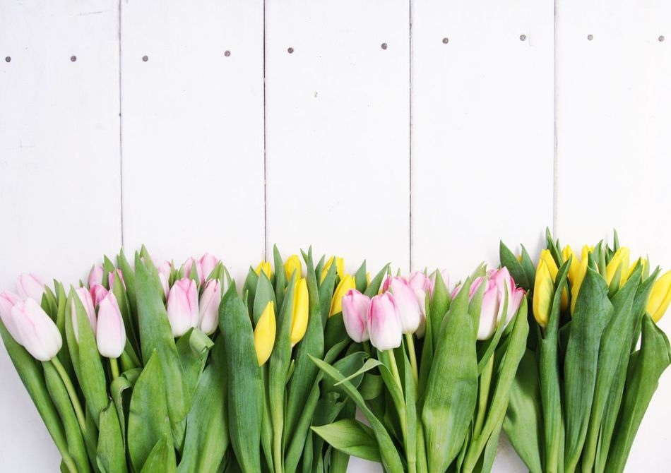Beautiful stock photos of muttertag,  Beauty In Nature,  Blooming,  Close-Up,  Day