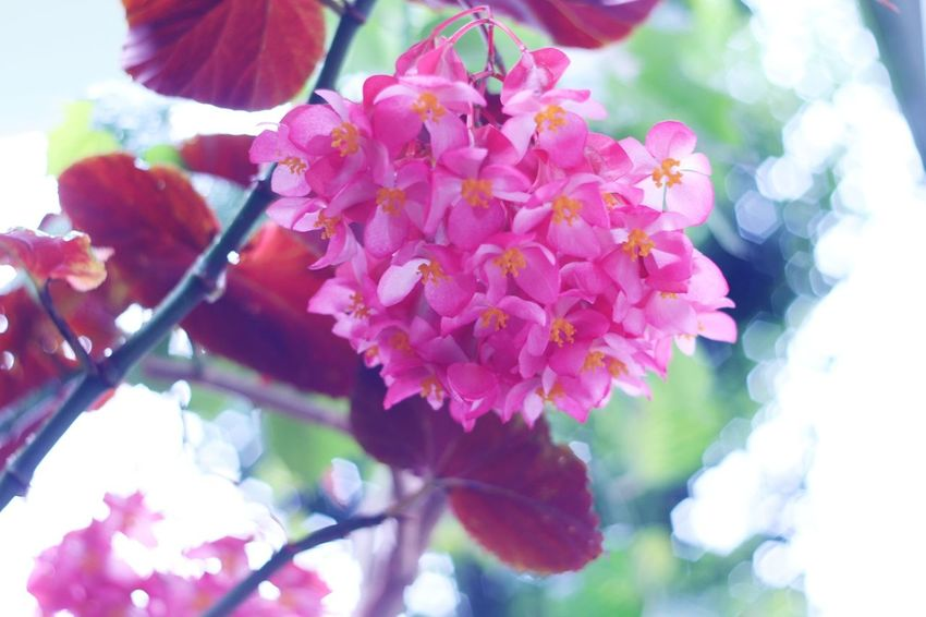 Flower Pink Color Beauty In Nature Nature Fragility Blossom Springtime Growth Outdoors Close-up Freshness Petal No People Day Flower Head Plant Tree Meyer-Optik-Görlitz Oreston 1.8/50 Canon