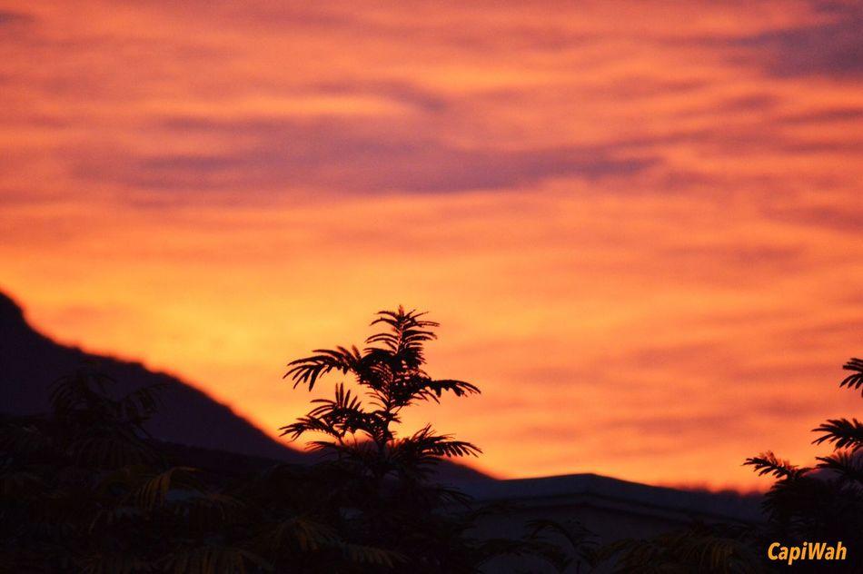 Buenas tardes Sunset #sun #clouds #skylovers #sky #nature #beautifulinnature #naturalbeauty #photography #landscape CapiWah