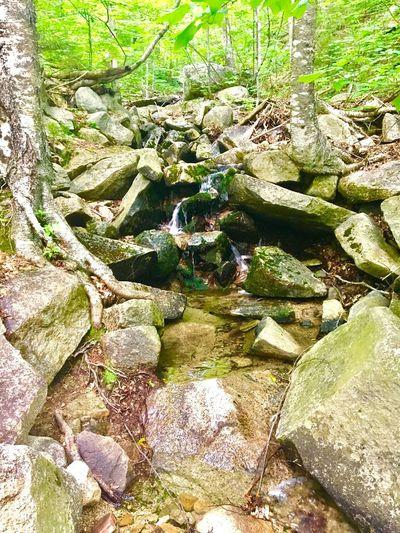 Breathing Space Cascadefalls Naturelovers Green Green Green!  Hikingadventures Peaceful Place Freeyourmindandtherestwillfollow