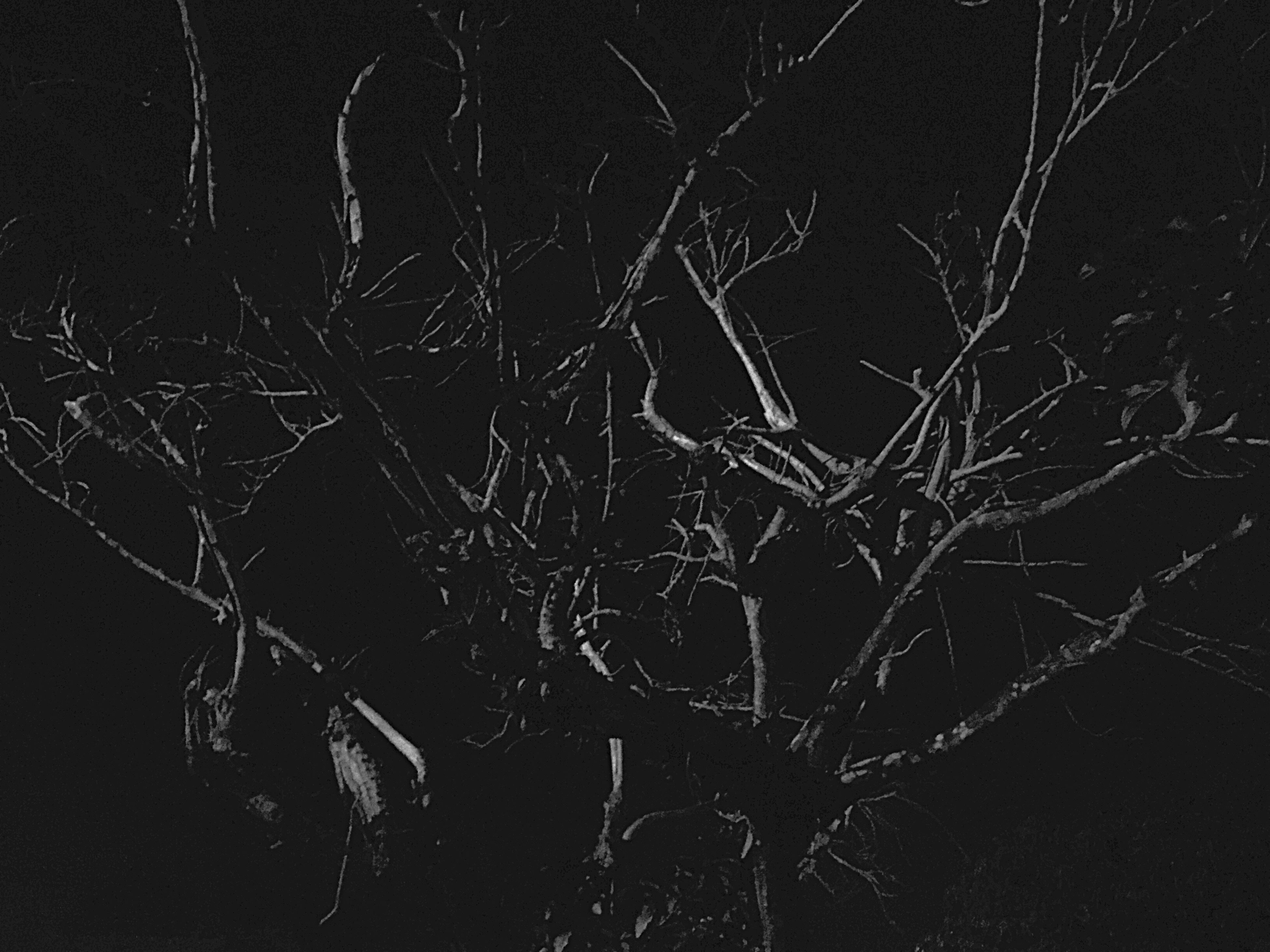 night, bare tree, illuminated, dark, low angle view, branch, silhouette, tree, light - natural phenomenon, sky, glowing, nature, no people, outdoors, tranquility, lighting equipment, backgrounds, copy space, abstract, cold temperature