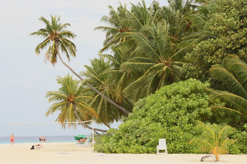 Palm Tree Tree Beach Sea Nature Outdoors Day Sand Vacations Travel Destinations Growth Beauty In Nature People Sky Adult Only Men Adults Only Strand Traumstrand Maledives Malediven  Holliday Nature Summer Water
