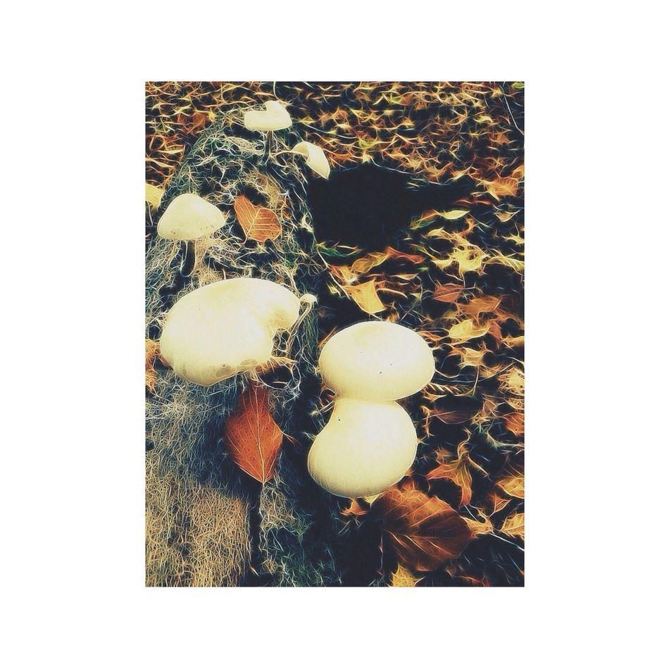 Mushrooms Forest Autumn Leaves