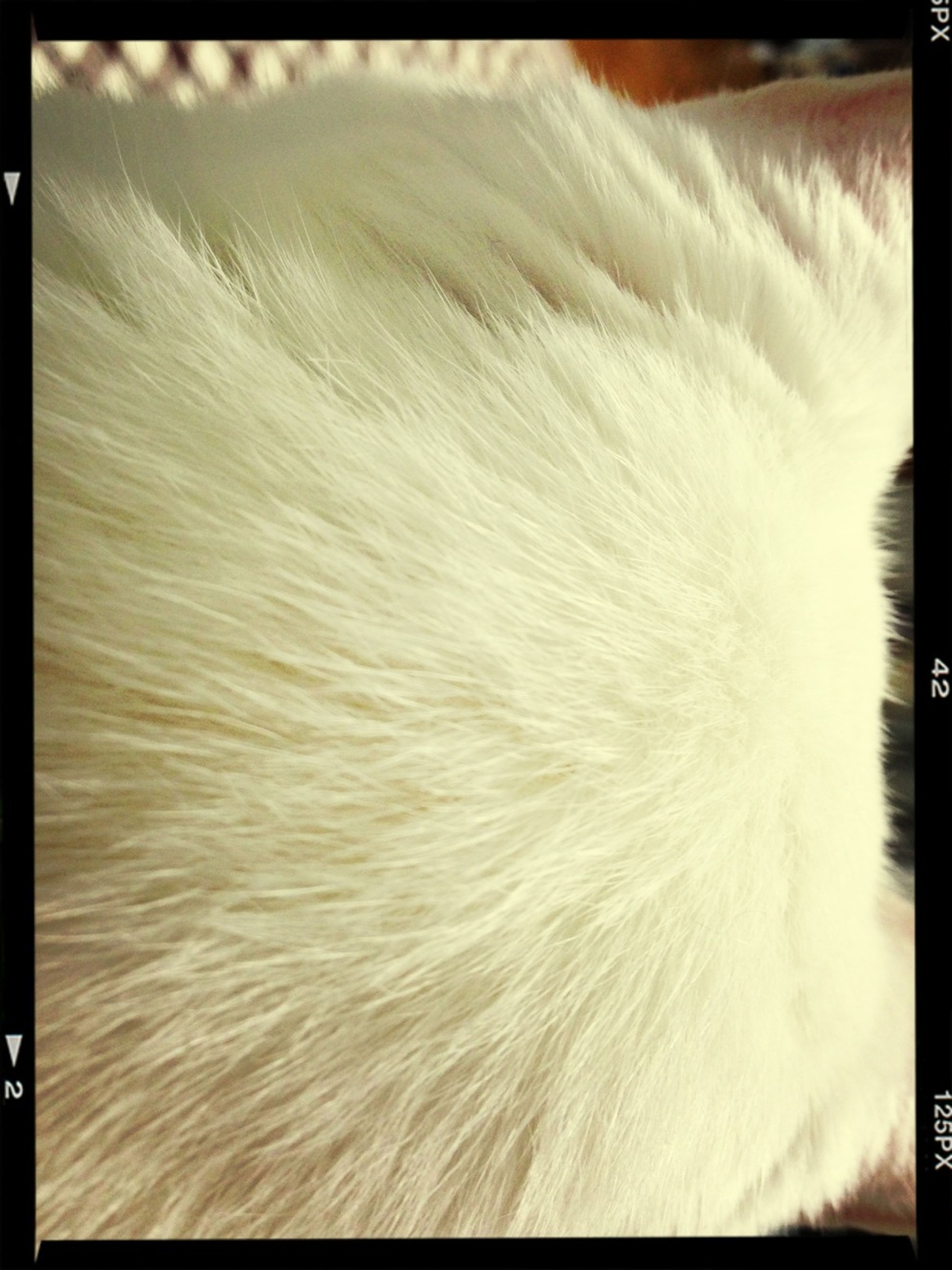 transfer print, auto post production filter, one animal, close-up, animal themes, indoors, pets, domestic animals, white color, animal hair, part of, no people, domestic cat, animal head, white, nature, softness, animal body part, cat, day