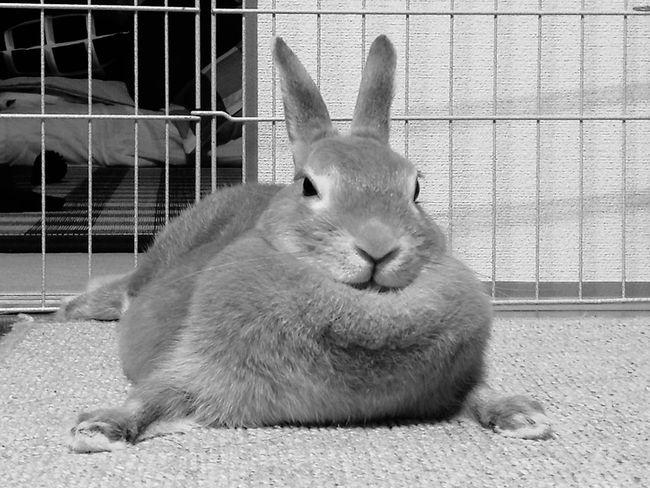 Rabbit 🐇 Rabbit ❤️ Pet Bad Mood Animal Small Animal Pet Photography  Pet Portraits