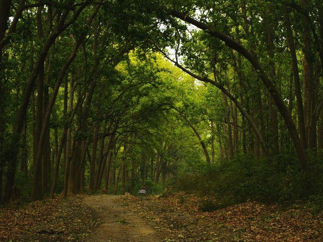 Naturebeauty Of Corbett National Park Eyeemnaturelover💕💕😊☺