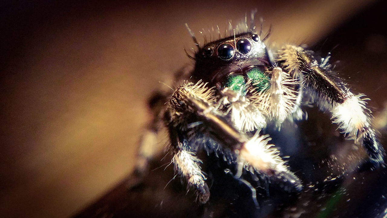There he is... Attack Of The Macro Collection! Insect Paparazzi Macro Addict EyeEm Macro Macro Spider Arachnophobia Spider Portrait Spiderworld Spiderland Macro Photography Spiderama Macro_collection Beauty In Nature