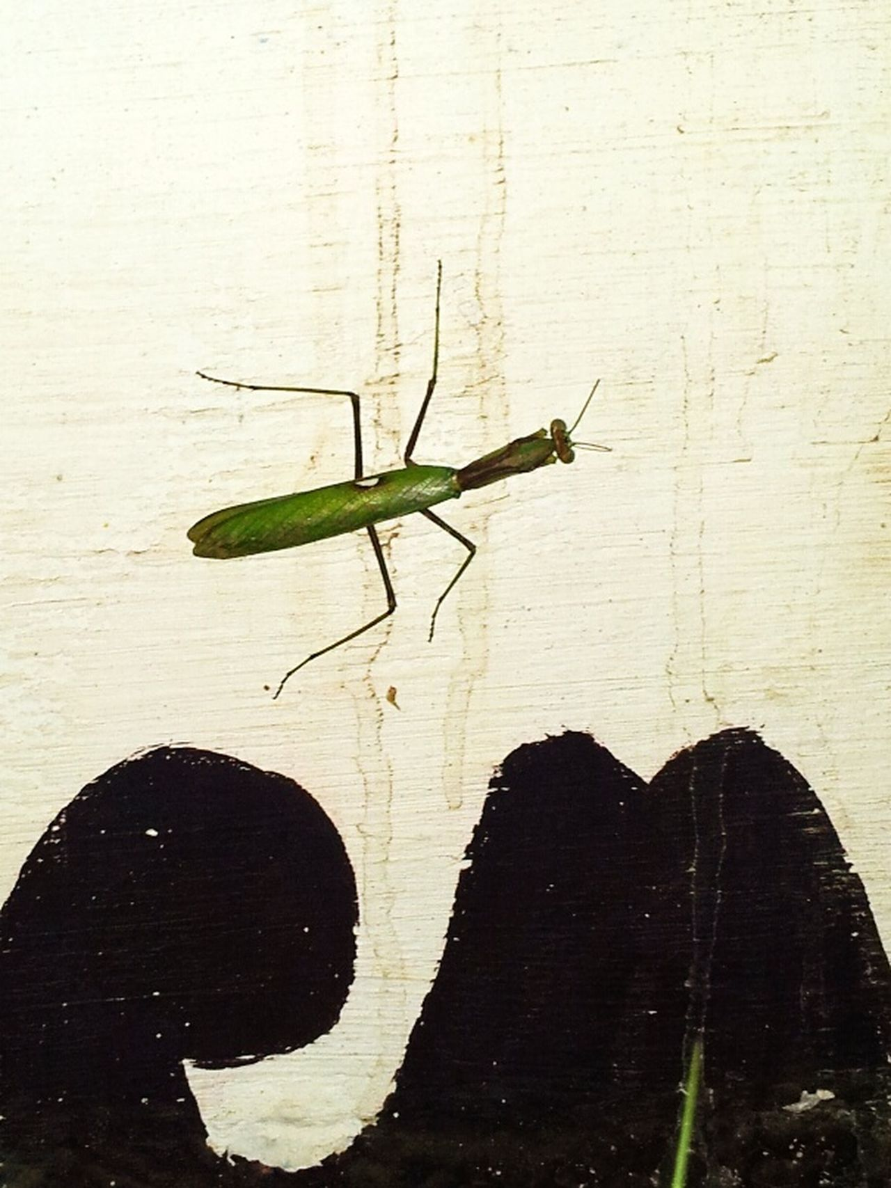 One Insect Green Insect Stay High Nice Insect No Poeple