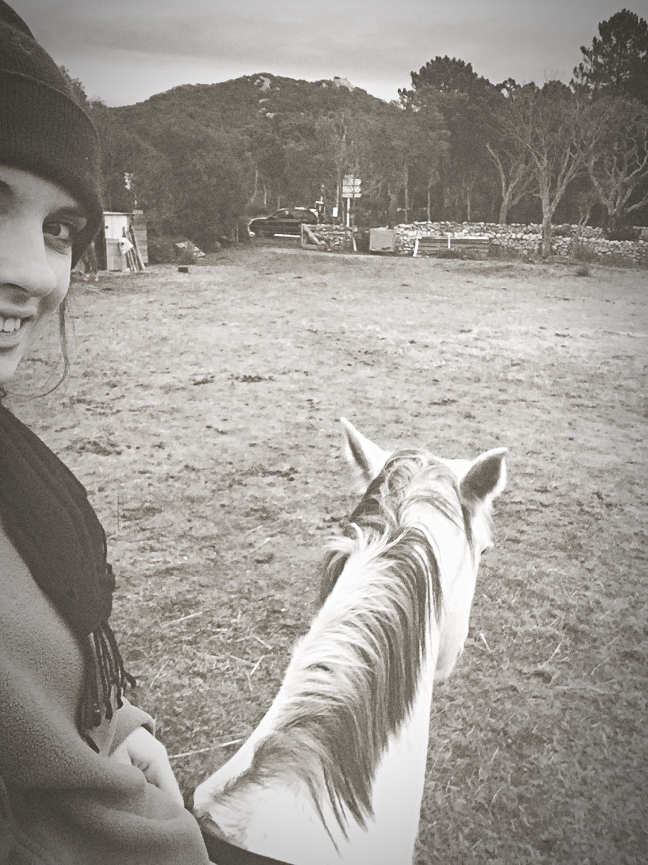 Horse Evasion Oklm