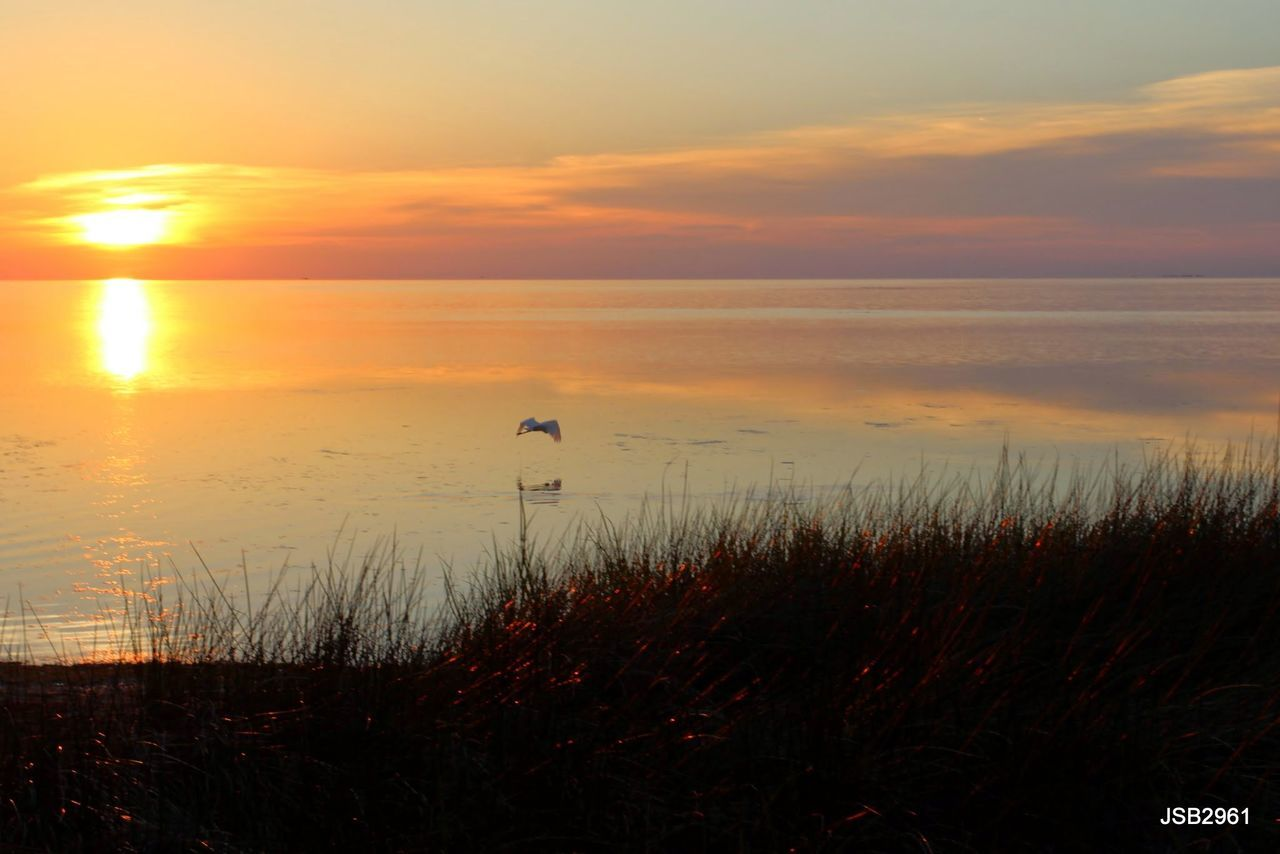 sunset, nature, beauty in nature, water, sea, scenics, tranquil scene, tranquility, sky, horizon over water, one animal, silhouette, grass, outdoors, no people, animal themes, animals in the wild, growth, beach, animal wildlife, bird, plant, day