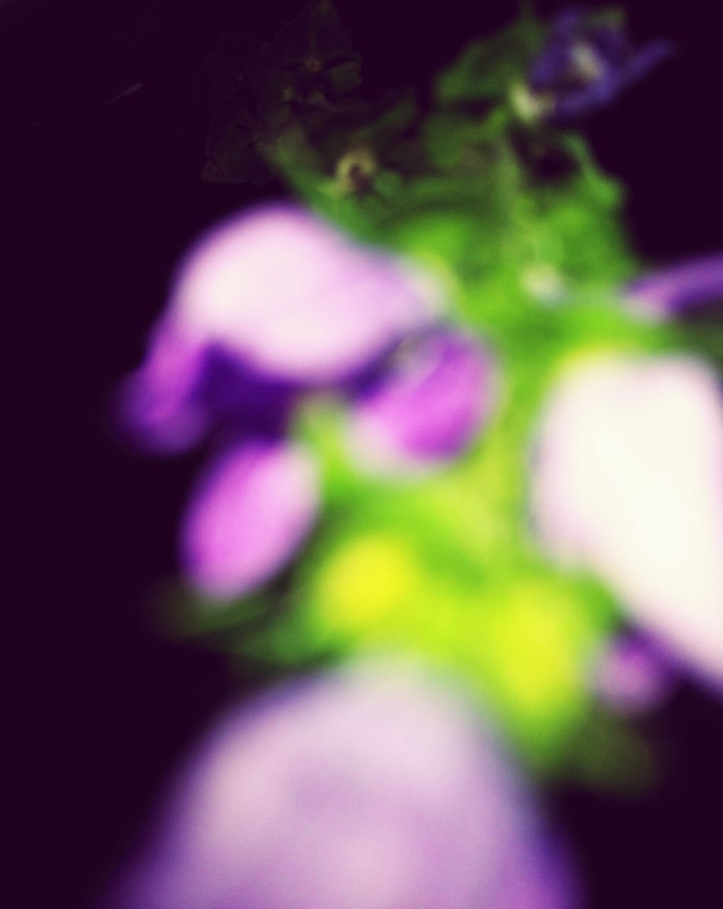 flower, purple, selective focus, beauty in nature, fragility, growth, close-up, nature, petal, plant, no people, day, freshness, outdoors, flower head
