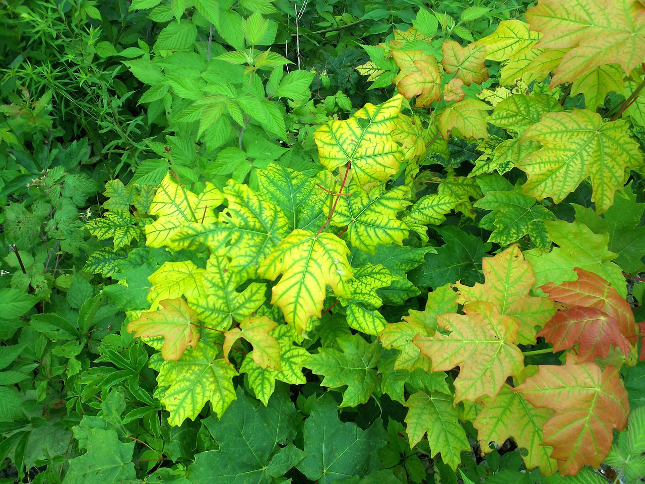 Foliage Foliage, Vegetation, Plants, Green, Leaves, Leafage, Undergrowth, Underbrush, Plant Life, Flora