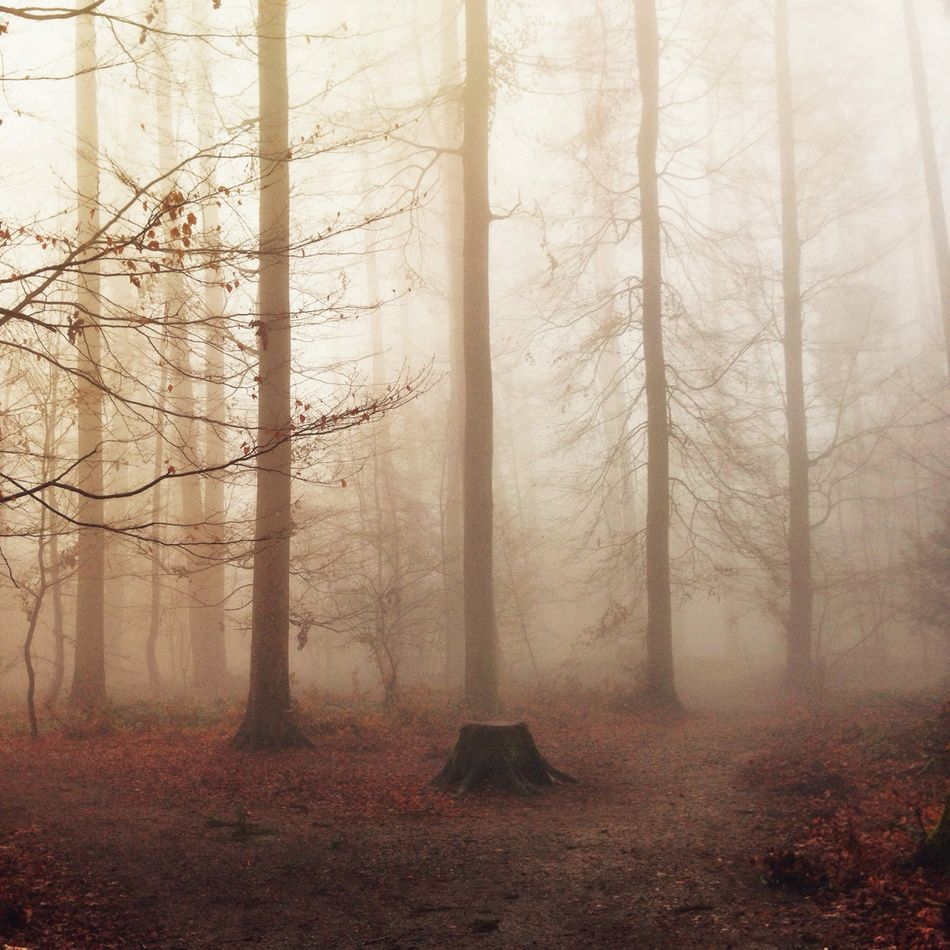 Beautiful stock photos of weather, Beauty In Nature, Branch, Day, Forest