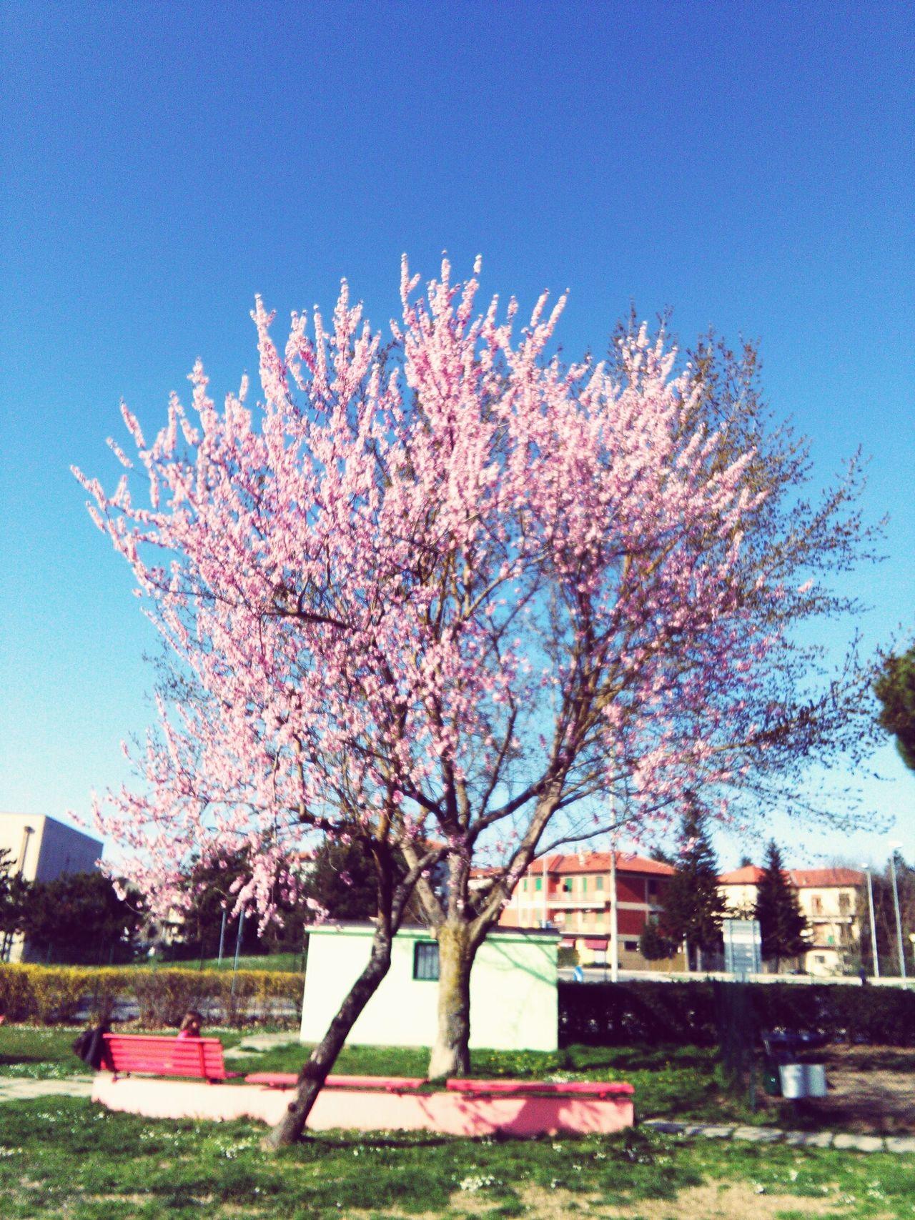 Primavera First Eyeem Photo EyeEmNewHere