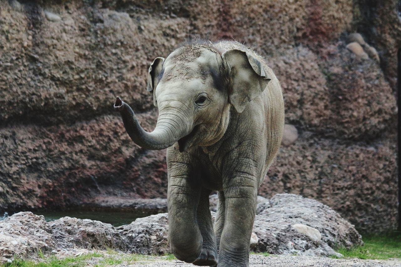 Omysha. Elefant. Tiere
