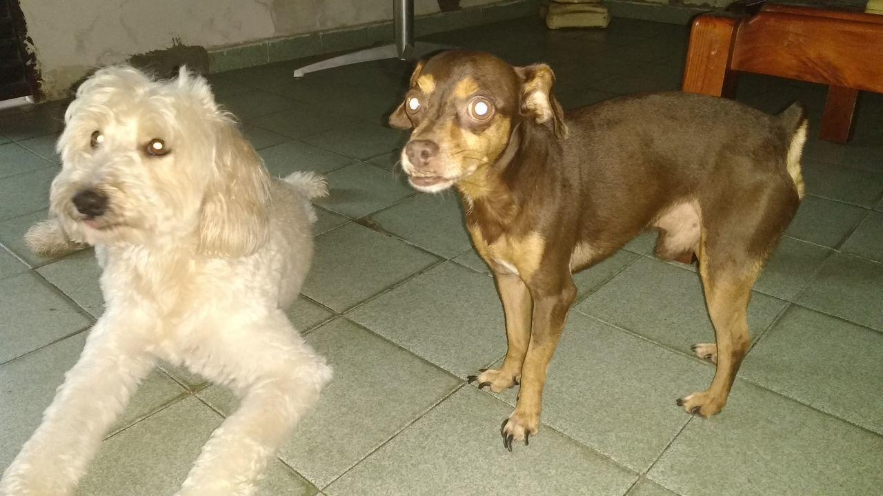 Dog Pets Domestic Animals Animal Mammal Indoors  No People Sitting Animal Themes Day