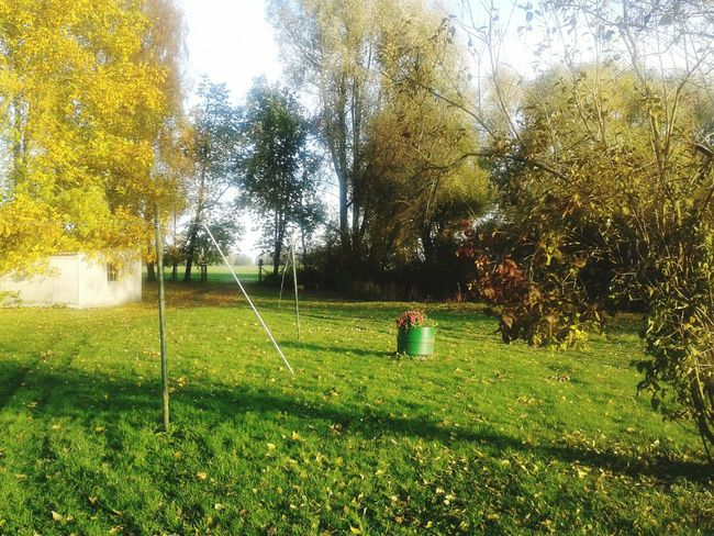 Rügen Lovers Grandma Green Plant Autumn Colors Autumn Leaves Autumn🍁🍁🍁 Garden Sunny Day Natural Beauty EyeEm Nature Lover Taking Photos Quiet Places Morning Beautiful Day