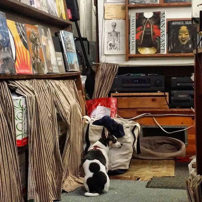 Bookstore Doggie Oakland Dogsofinstagram California dog books