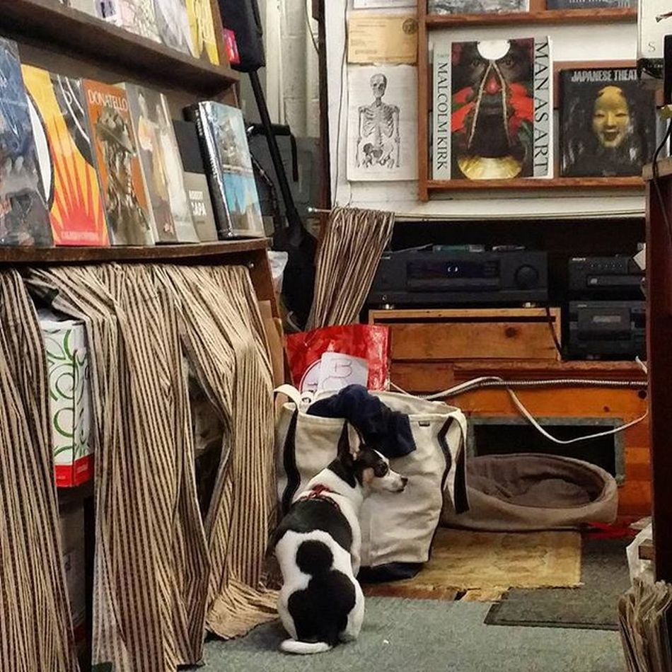Bookstore Doggie Oakland Dogsofinstagram California dog books
