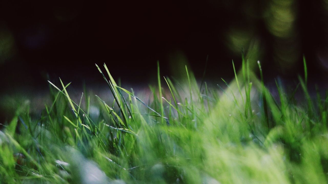grass, growth, nature, plant, field, meadow, no people, outdoors, close-up, day, freshness