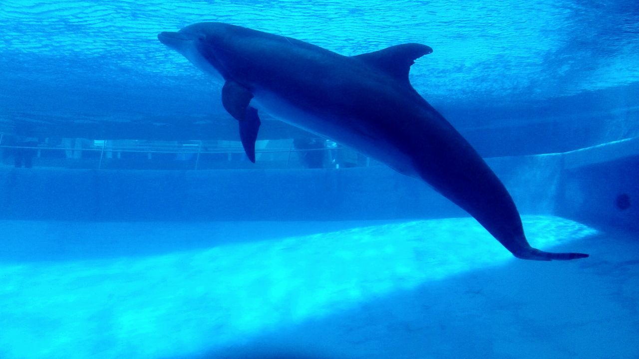 Cobalt Blue By Motorola Dolphin Beautiful Animals
