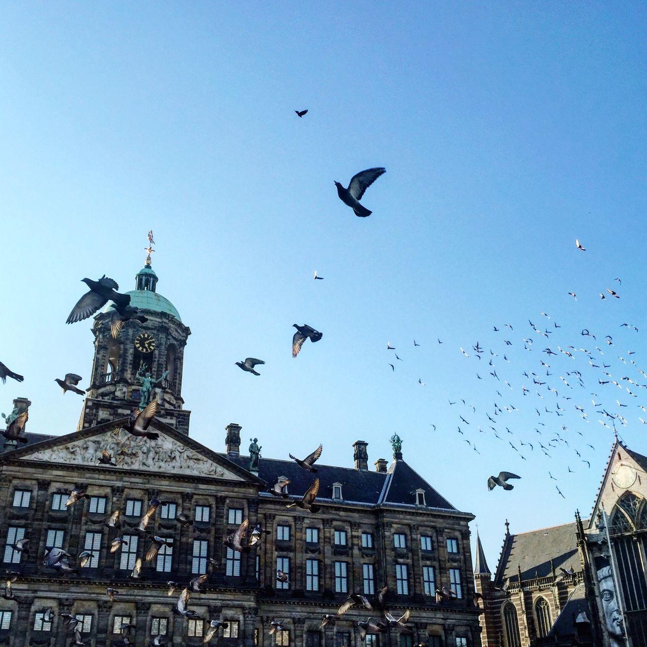 Beautiful stock photos of amsterdam, Animal Themes, Animal Wildlife, Animals In The Wild, Architecture