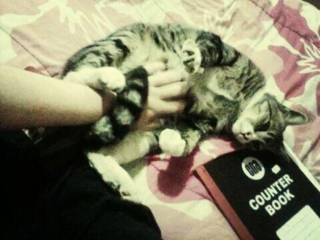 Mybaby❤ Kittylove Fatcat Kitty Cat
