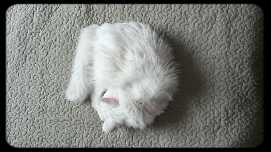 Cat Vasiliy First Eyeem Photo