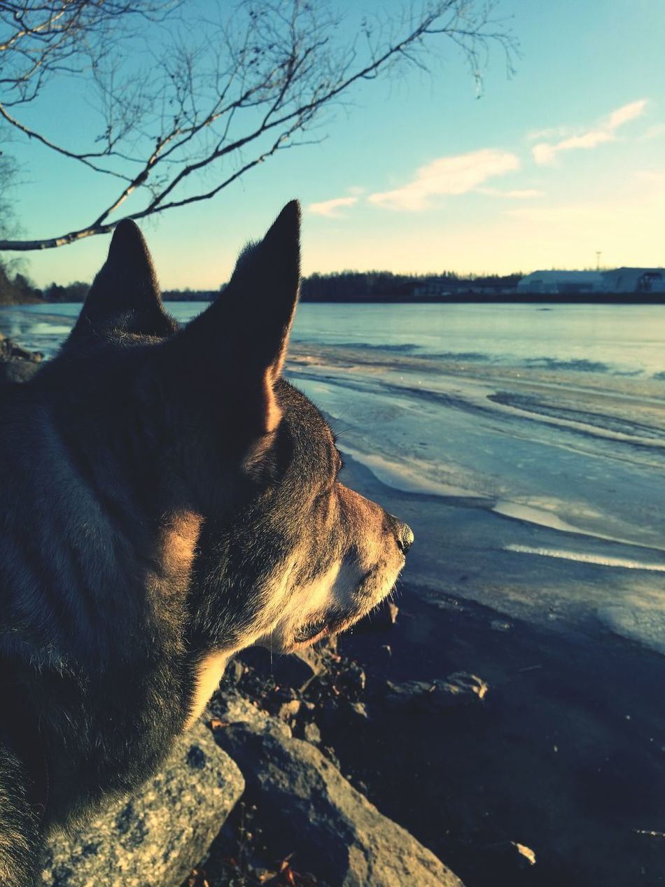 Dog Portrait Dogslife Walking With My Dog Watching The River Iced River ❄