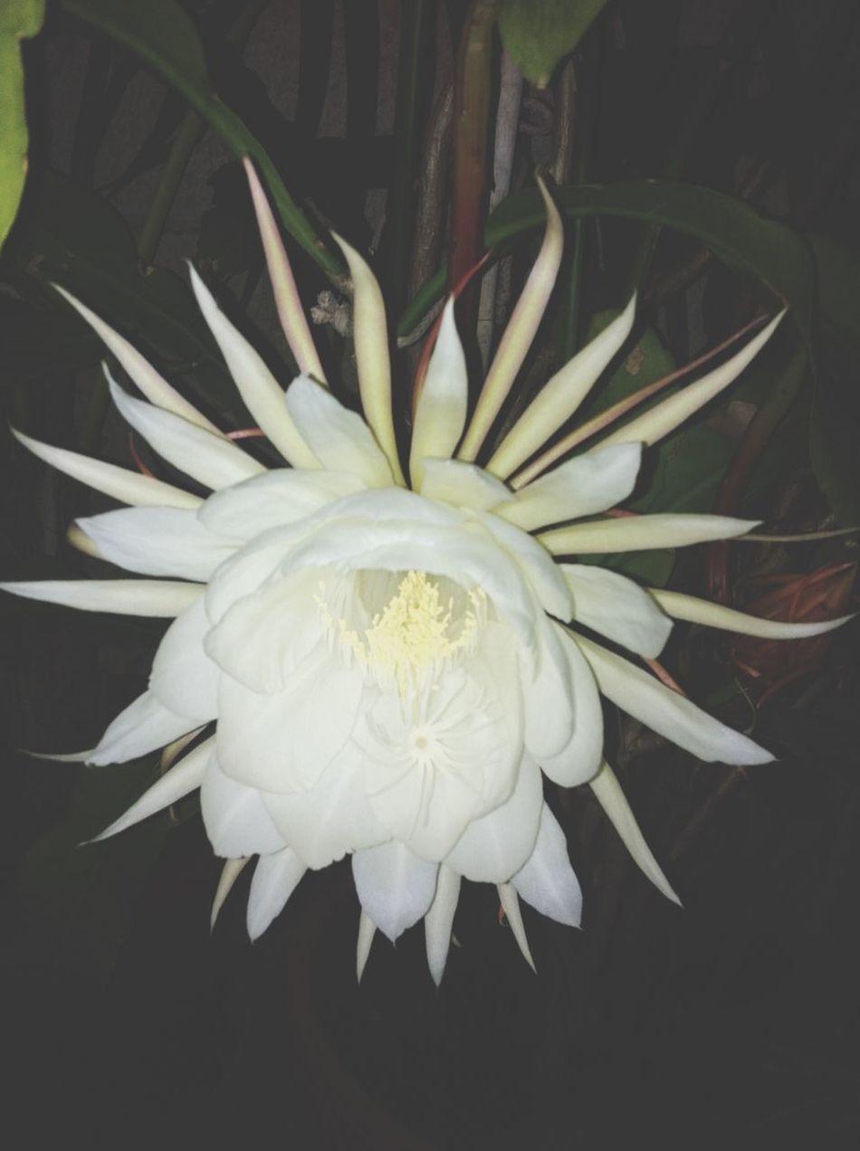 Flower's Night Nature EyeEm Nature Lover EyeEm Best Shots