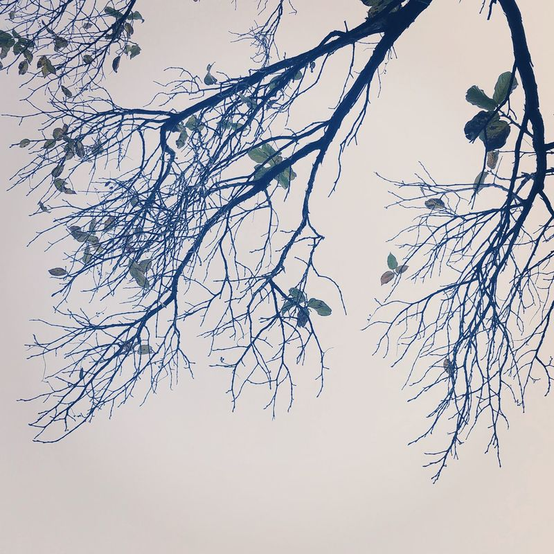 Captured ad morning in india himachal Nature No People Branch Close-up Low Angle View Outdoors Tree Sky Beauty In Nature Cold Temperature Day Bare Tree Tpsolympus EyeEmNewHere