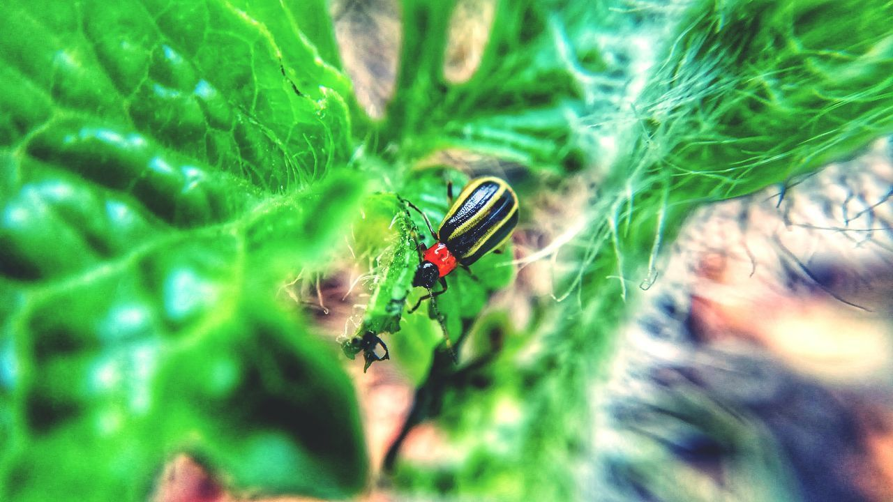 Ladybugmacro Green Color Animal Themes Animals In The Wild Nature Plant Leaf Rainy Day