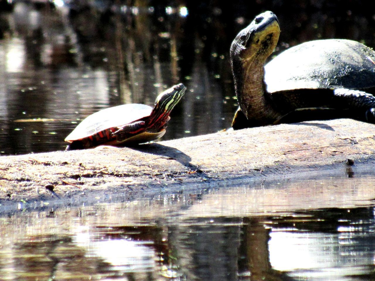 Small And Swift Taking Photos Check This Out Wildlife & Nature Wildlife Turtles(: Turtle A Walk In The Woods The Great Outdoors - 2016 EyeEm Awards Nature Diversities