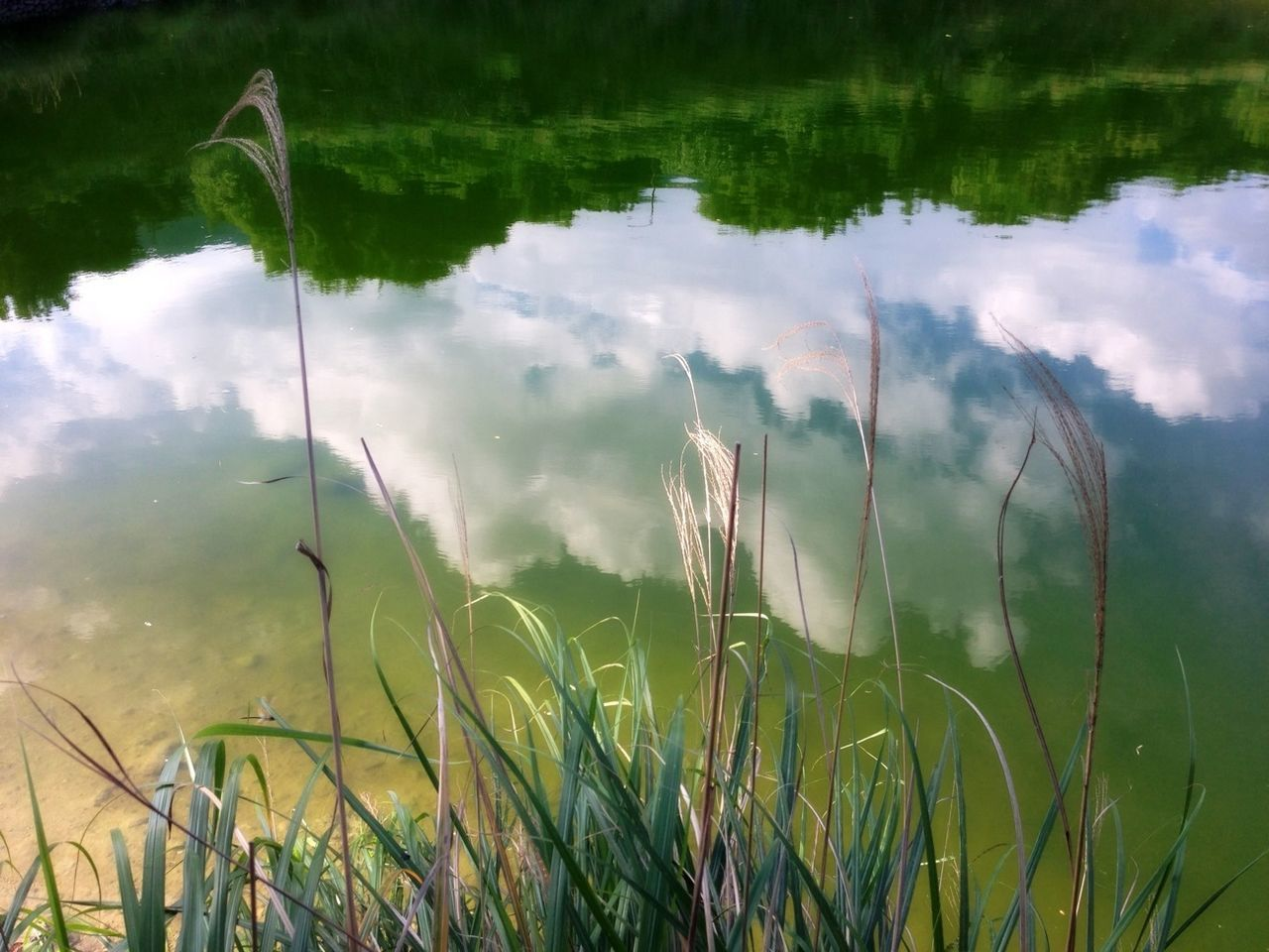 growth, grass, nature, plant, green color, field, reflection, water, no people, tranquil scene, outdoors, day, beauty in nature, tranquility, lake, scenics, sky, close-up