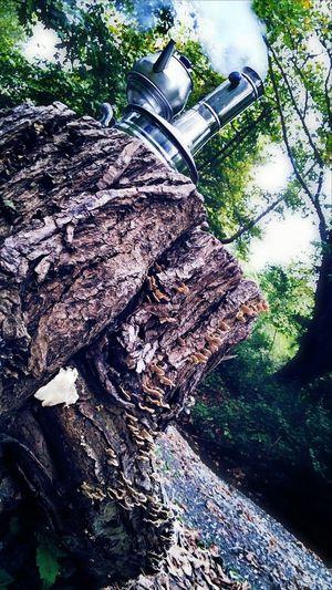 Semaverkeyfi Eye4photography  Popular Photos Trees Open Edit Tree Green Huzurvesonsuzluk Zoomeffect