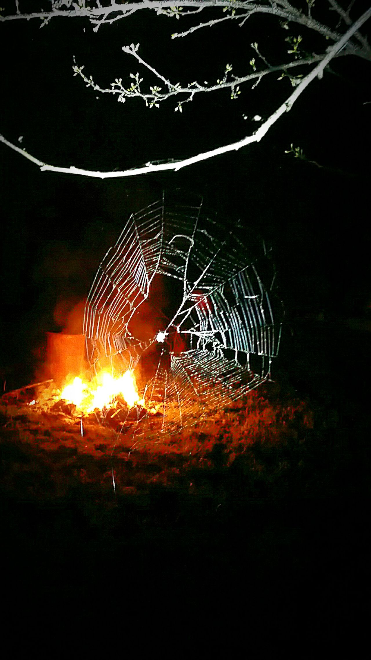 Night Motion Outdoors No People Illuminated Nature Spider Web Beauty In Nature Fire Background Macro Arachnid Macro Spider Web Backlit Glowing Complexity Insect Flame Fire Burning Heat - Temperature Backgrounds Design Night Insects Detail