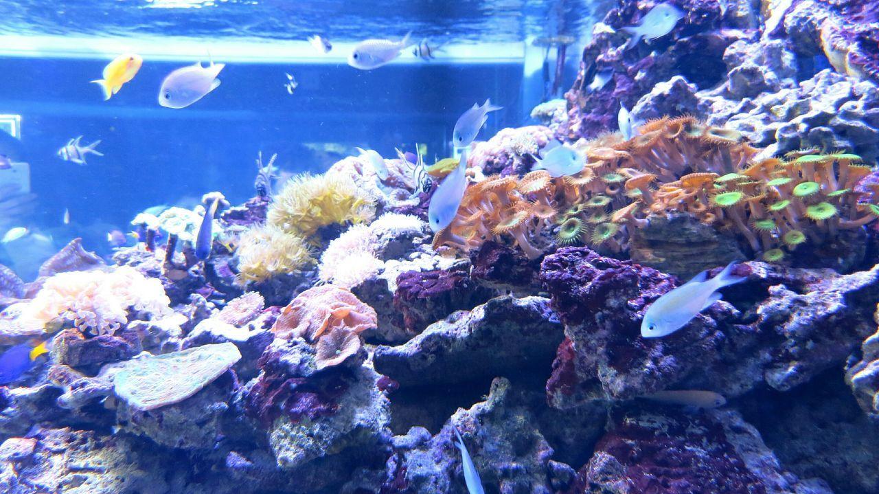 Sea Life Fishes Underwater Underwater Photography Aquarium Aquarium Life Aquarium Photography Wildlife Nature Animals Animal Photography рыбы рыбки аквариум животные Дикая природа подводный мир фото природы