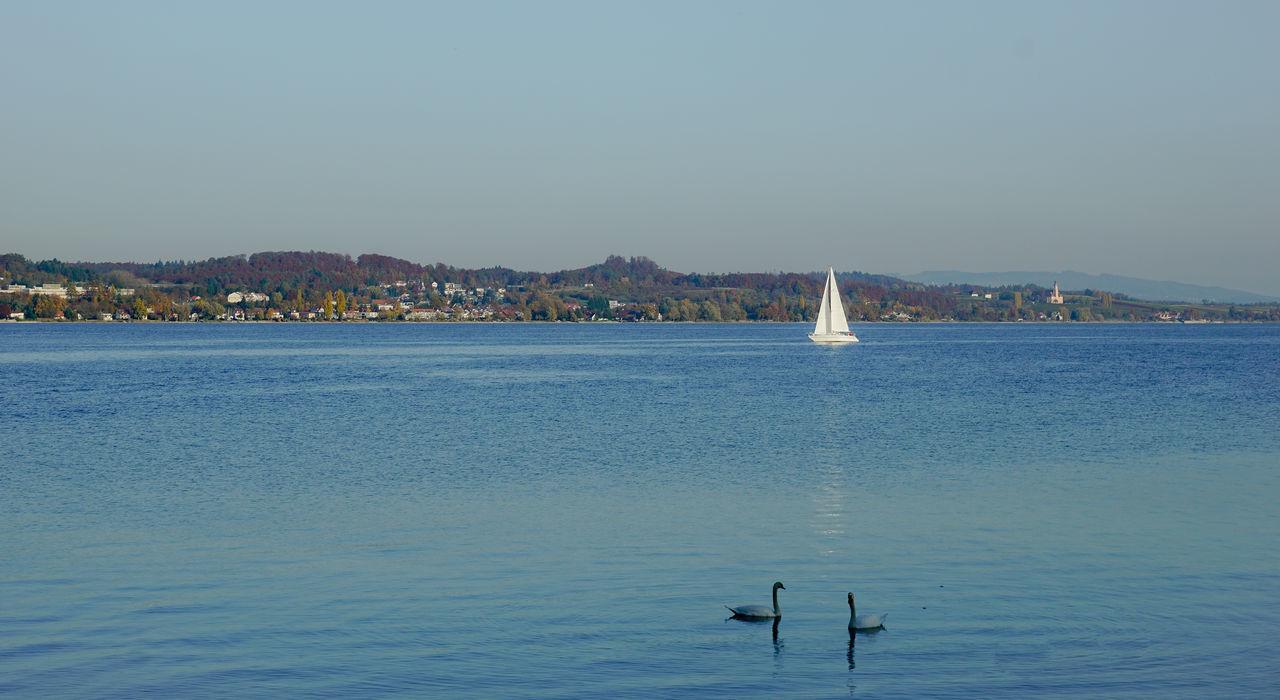 Bodman Lake Constance Lake View Nature Recreation  Sailing Sipplingen Sky Sky And Clouds Swan Water Überlingen