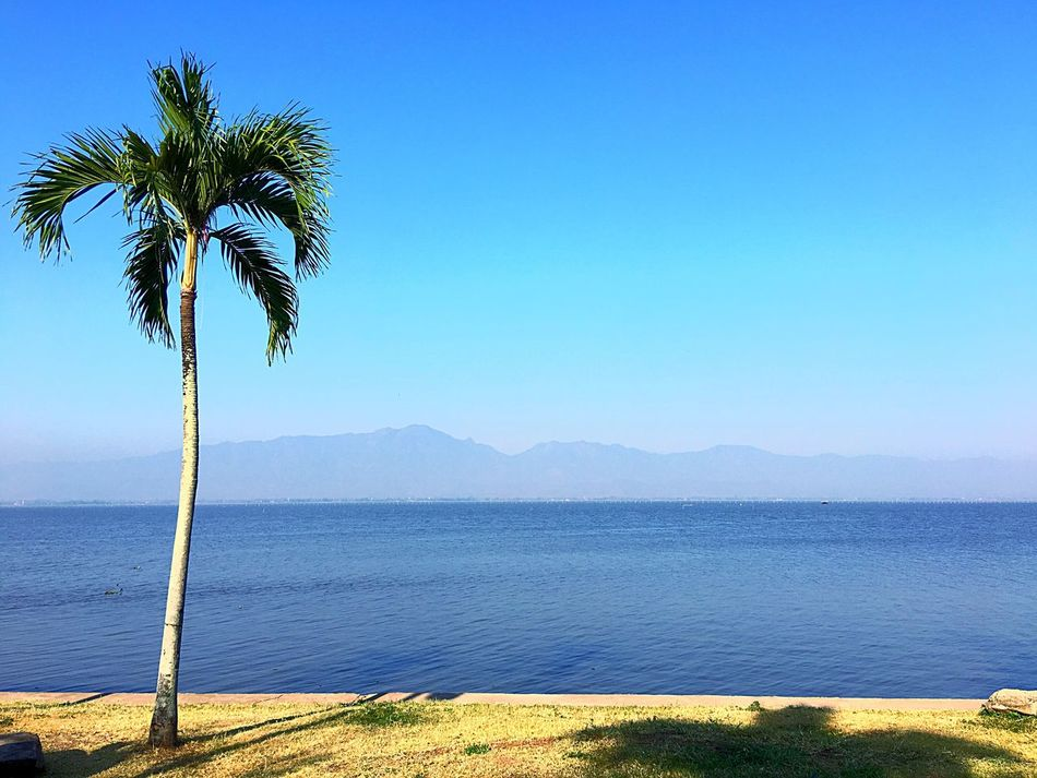 Palm Tree Blue Beauty In Nature Nature Clear Sky Growth Tranquil Scene Scenics Tranquility Water Tree Sea Mountain No People Outdoors Day Sky