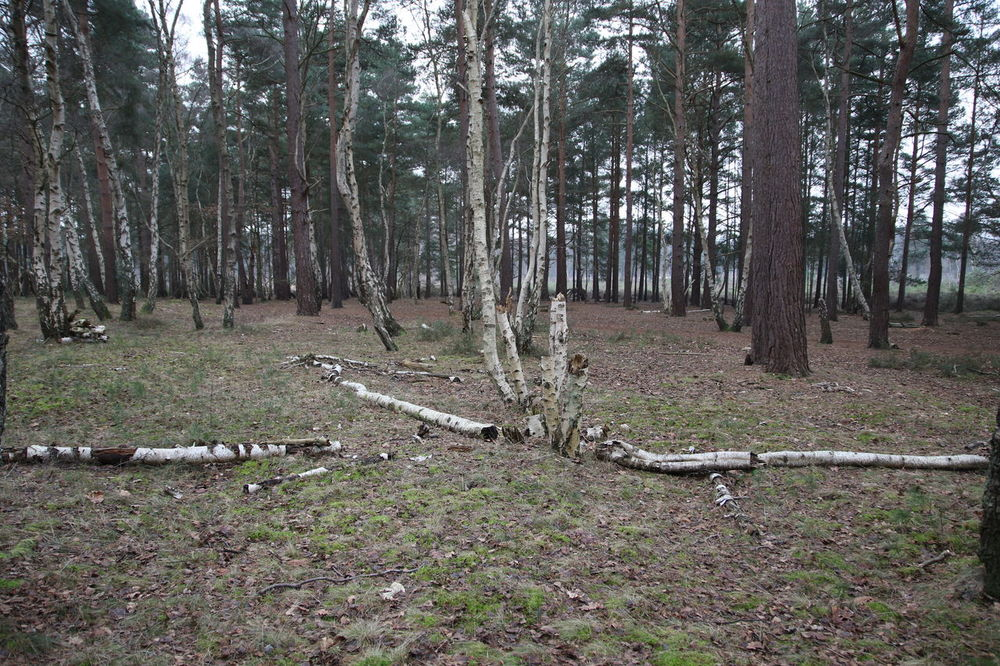 Beauty In Nature Branches Cold Country Walk Day Deserted Forest Growth Nature No People Outdoors Silver Birch Surrey Countryside Surrey Heath Tranquility Tree Tree Trunk