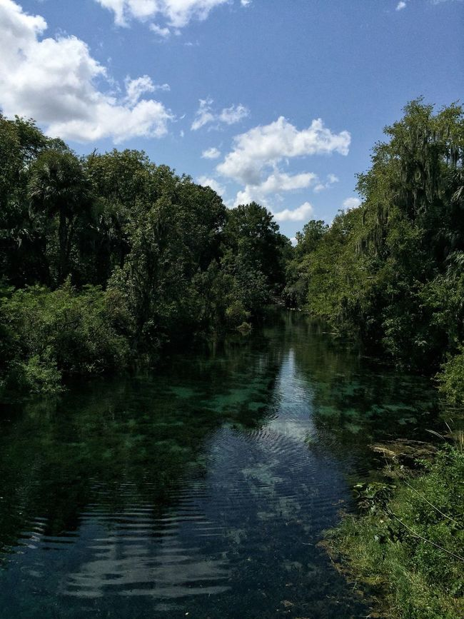 Crystal clear water Silver Springs State Park Silver Springs Florida Florida Park Florida Nature Spring Water Crystal Clear Waters Lush Foliage
