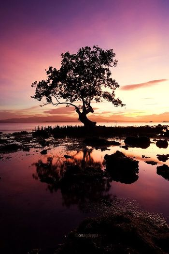 Protecting Where We Play Lone Mangrove Puerto Princesa City Palawan Philippines