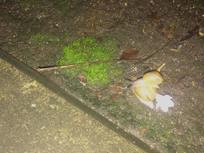 Nature Outdoors Snails Rainy Days No People Animal Themes Love Mollusca Family Snail Shell