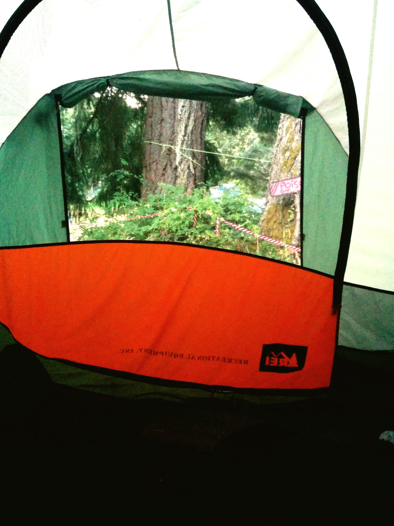 Holiday POV View From A Tent Early Morning Poison Oak
